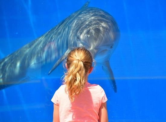 piscis delfín