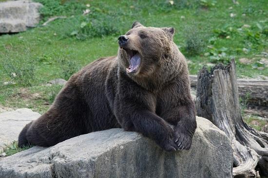 oso virgo