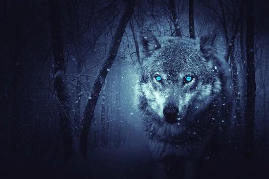 capricornio lobo