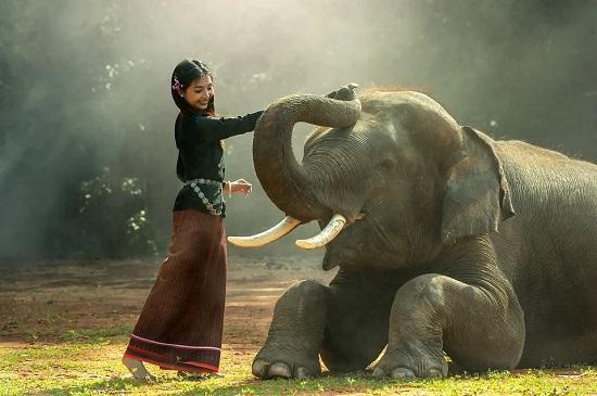 sagitario elefante
