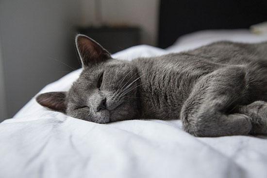 limpieza energética cama
