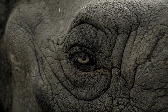 elefante totem