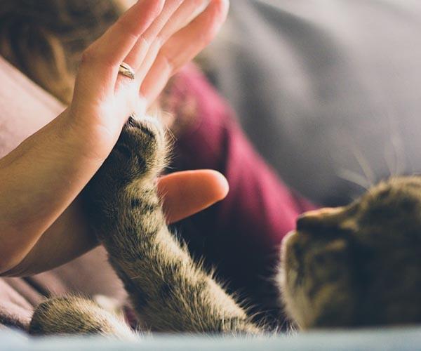 Interpretación de los sueños con gatos