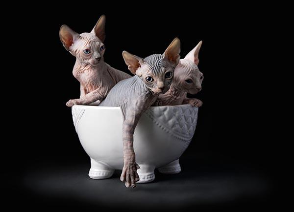 Gato efinge egipto