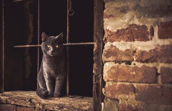 Significado esotérico de los gatos