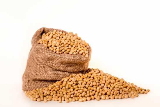 habas de soja plantas medicinales semillas