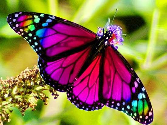 La Simbología Esotérica De La Mariposa