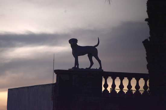 la casa de los perros videntes en guadalajara mexico