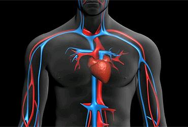 mejora-circulacion-sangre