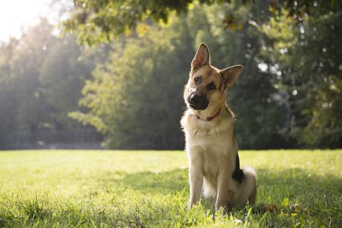 Resultado de imagen de perros comportan raro
