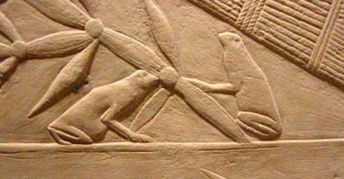 Rana en el Antiguo Egipto