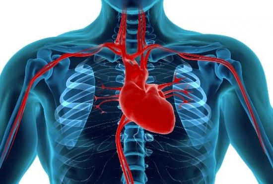 salud_cadiovascular